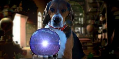 LUBEN ΑΠΟΚΛΕΙΣΤΙΚΟ: Ο Ζήκος ο Σκύλος-Μέντιουμ Προβλέπει τα Αποτελέσματα του Μουντιάλ