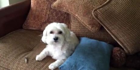 Πώς μπορείς να είσαι ΑΠΟΛΥΤΩΣ βέβαιος ότι ο σκύλος σου έκανε μαλακία όσο έλειπες απ' το σπίτι;