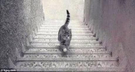 Κανείς στο ίντερνετ δεν μπορεί να καταλάβει αν αυτή η γάτα πηγαίνει πάνω ή κάτω