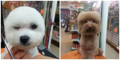 Τετράγωνες και ολοστρόγγυλες μούρες: H τελευταία λέξη της μόδας για σκύλους (PHOTOS)