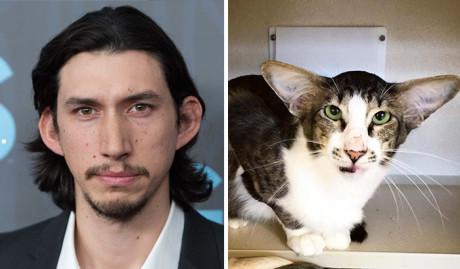 Θαύμα! Ο Kylo Ren εμφανίστηκε σε φάτσα γάτας (PHOTO)
