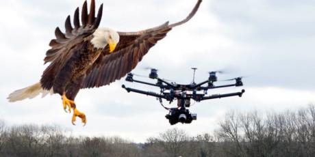 ΜΕΤΑΛ: Η Ολλανδική Αστυνομία εκπαιδεύει γεράκια για να πιάνουν drones (VIDEO)