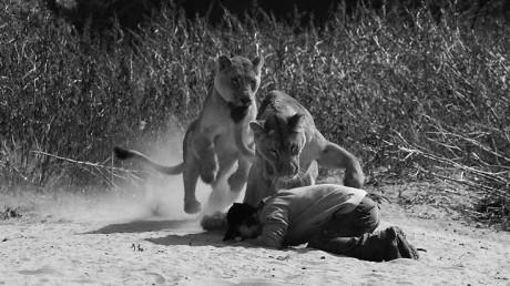 Χριστιανός ιεροκήρυκας πήγε να κηρύξει το λόγο του Θεού σε λιοντάρια και αυτά του δάγκωσαν τον κώλο