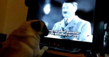 Συνελήφθη άνδρας στη Σκωτία που έμαθε τον σκύλο της κοπελας του να χαιρετάει ναζιστικά (PHOTO)