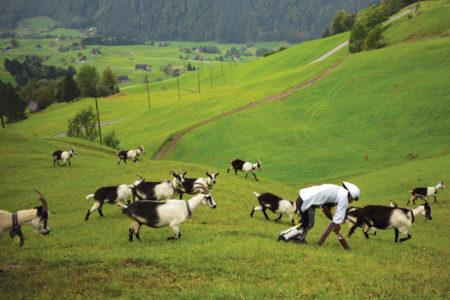 Βρετανός αποφάσισε να τα παρατήσει όλα και να πάει να ζήσει σαν κατσίκα στις ελβετικές Άλπεις