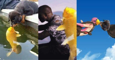 Το Ίντερνετ δίνει ρέστα στο photoshop με την εικόνα ενός κουταβιού που φιλάει ένα ψάρι (PHOTOS)