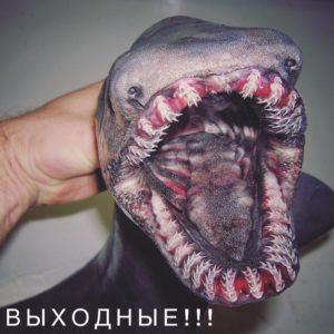 Oι φωτογραφίες με αυτά  που έπιασε ένας Ρώσος ψαράς έρχονται απευθείας από την κόλαση (PHOTOS)