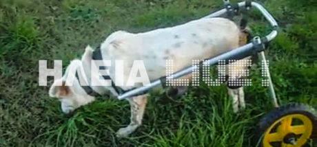 Σκυλίτσα από την Ηλεία ξανακάνει βόλτες με αμαξίδιο, γιατί ο νομός της καρδιάς μας έχει και ανθρώπινο πρόσωπο (PHOTOS)