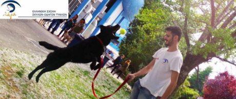 Από φόλα πέθανε, όπως όλα δείχνουν, ένας από τους ελάχιστους σκύλους-οδηγούς τυφλών της Ελλάδας