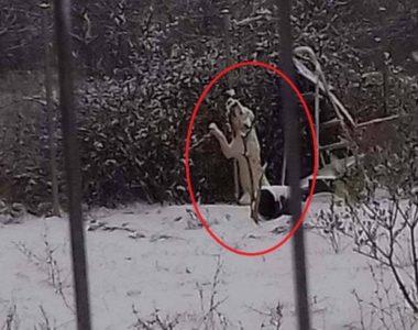 Κυριολεκτικά παγωμένος βρέθηκε σκύλος που ήταν δεμένος σε οικόπεδο στα περίχωρα της Δράμας (PHOTOS)