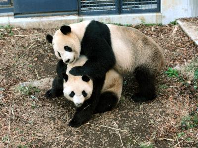 Όλοι πανηγυρίζουν στην Ιαπωνία γιατί γαμήθηκαν τα πάντα στον ζωολογικό κήπο του Τόκιο (VIDEO)