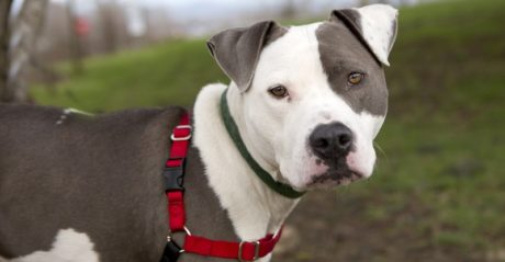 Eξάρχεια: Σκυλιά πιτ μπουλ επιτέθηκαν σε αστυνομικούς έξω από το σπίτι του Αλέκου Φλαμπουράρη