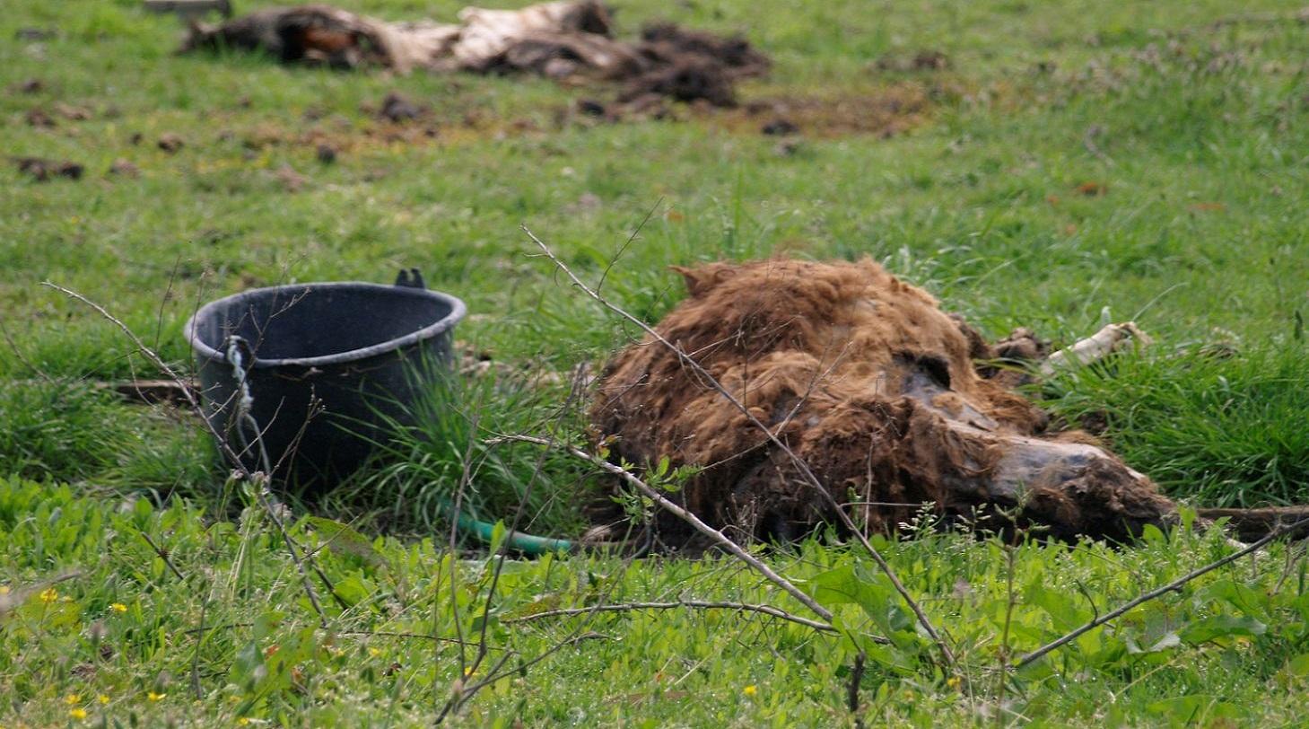 Τραγικές εικόνες από τις συνθήκες αιχμαλωσίας σε ζωολογικό κήπο στην Πάτρα