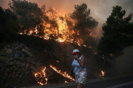 Μόλις τριάντα χρονάκια θα χρειαστούν τα δάση για να επανέλθουν από τις πυρκαγιές