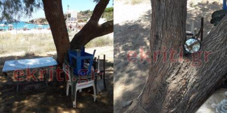 Παραθεριστές στην Κρήτη αλυσόδεσαν δεντρό για να μη τους πάρουν τον ίσκιο