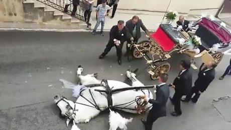 Σικελία: Άλογο της άμαξας νεόνυμφων καταρρέει μπροστά στην εκκλησία λόγω του καύσωνα