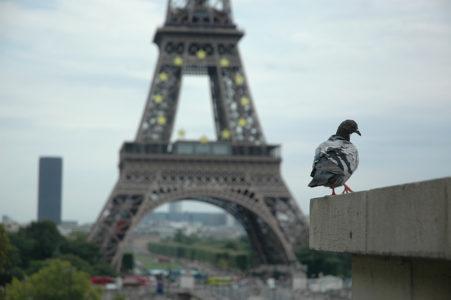Αρπακτικά πουλιά θα ξαμολήσει δήμαρχος διαμερίσματος του Παρισιού για να κυνηγήσουν περιστέρια