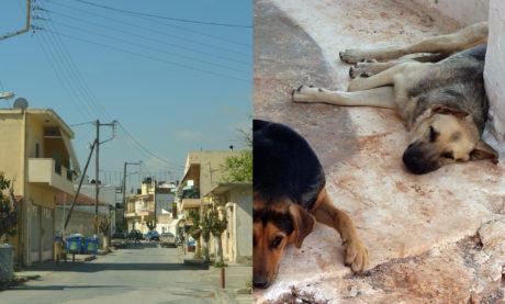 Κρήτη: Γονιός μαθητή έβγαλε όπλο με σιγαστήρα και πυροβόλησε σκύλο έξω από δημοτικό σχολείο
