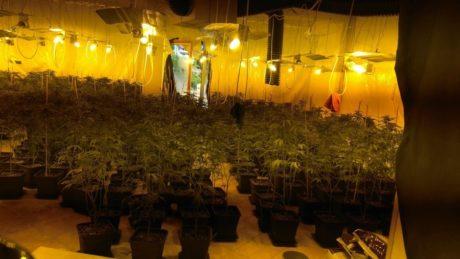 Startup κάνναβης καλλιεργούσε φυτά αξίας 4 εκατομμύριων ευρώ σε βίλες στο Νέο Βουτζά (όπου κι αν είναι αυτό)