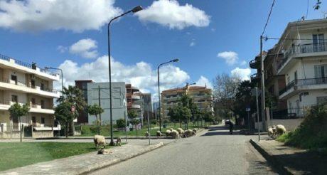 Αγρίνιο: Tα πρόβατα έχουν εισβάλλει και απελευθερώνουν την πόλη από τους ανθρώπους
