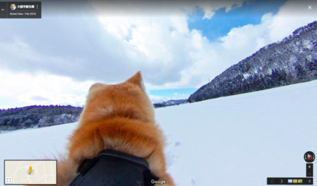 To Google Dog View σε αφήνει να δεις κι εσύ από κοντά κάδους και κώλους σκύλων