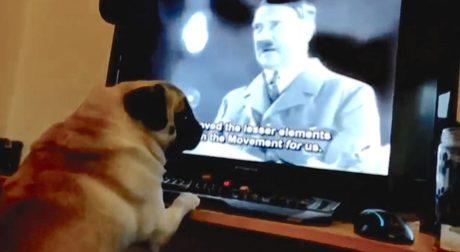 Youtuber βάζει το σκυλί του να χαιρετά ναζιστικά, τρώει καμπάνα από δικαστήριο
