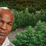 Ο Mike Tyson φτιάχνει τηλεοπτική σειρά για την χασισοφυτεία του, γιατί όλοι χρειάζεται να χαλαρώσουμε λίγο
