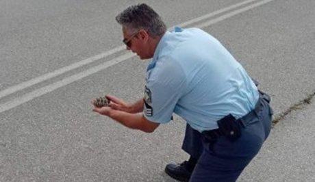 Αστυνομικός κινδυνεύει τη ζωή του, βοηθάει χελωνάκι να περάσει το δρόμο στην Κοζάνη