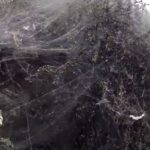 Μετά το Αγρίνιο και στην Ξάνθη εμφανίστηκε ένα χιλιόμετρο ιστού αράχνης