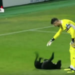 Σκύλος μπουκάρει σε αγώνα ποδοσφαίρου, δεν φεύγει πριν του χαϊδέψουν την κοιλιά