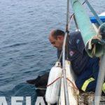 Η live θαλάσσια διάσωση της φοράδας Χάιδως στην Ηλεία είναι καλύτερη από κάθε Survivor [VIDEO]