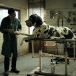 Dogman: 10 χρόνια μετά το Gomorrah, ο σκληρός ναρκω-ρεαλισμός του Matteo Garrone είναι ακόμα ζωντανός