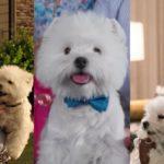Αυτό το χνουδωτό σκυλί έχει παίξει σε δύο γαμάτες ταινίες φέτος, ας του δώσει κάποιος ένα Όσκαρ