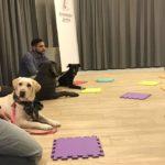 Σε σκυλιά πλέον κάνει μάθημα Ελληνισμού το φροντιστήριο του Άδωνι, σκυλιάζουν οι haters