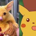 Αυτό το viral κίτρινο αρούρι αποδεικνύει ότι ο Pikachu είναι αληθινός γαμώτο